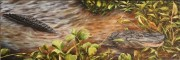 Young Alligator at Lake Hackberry, near Gibson, LA 10 x 30 inches, oil on canvas
