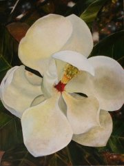 Sweet Magnolia, Pearl River 24 x 18 inches, oil on canvas