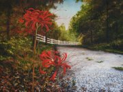 Surprise (Spider) Lilies along River Road 36 x 48 inches, oil on canvas